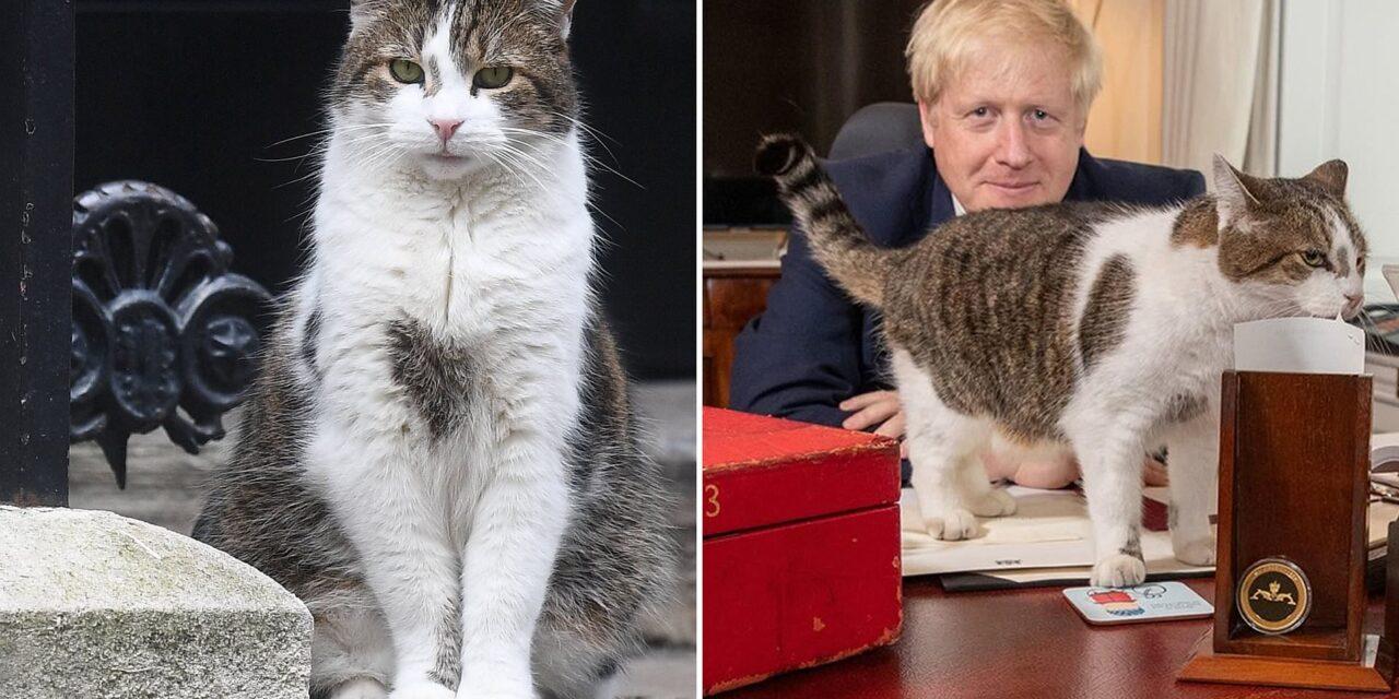Larry el gato que tiene un cargo en el gobierno del Reino Unido