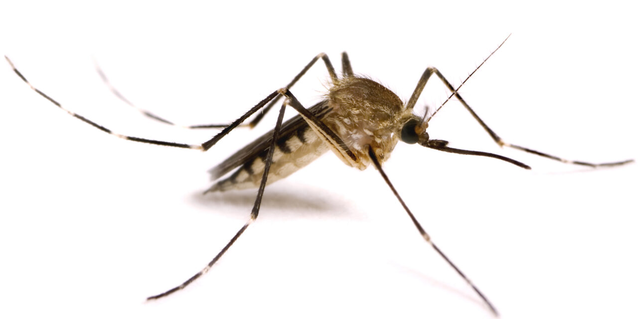 Los mosquitos modificados genéticamente de Bill Gates causan polémica