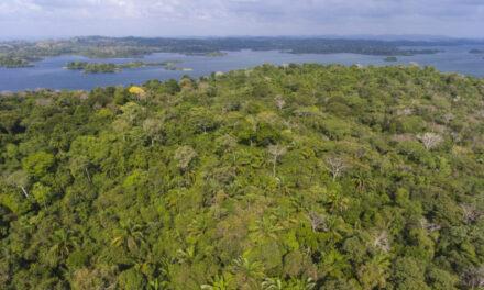 Panamá, Bután y Surinam son carbono negativos, únicos países al mundo